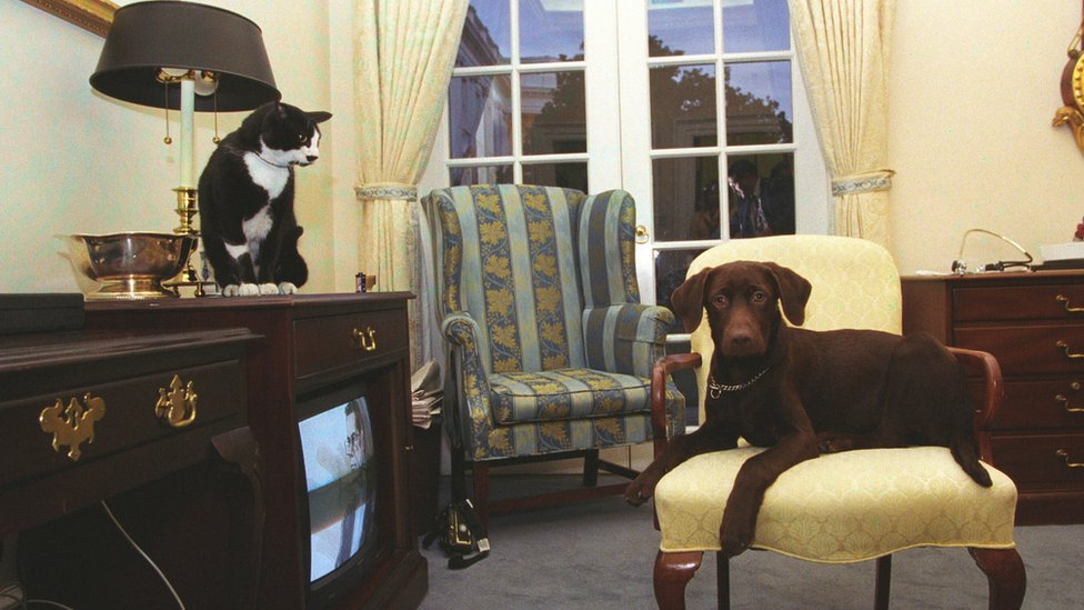 Socks the Cat, with black fur, white face, and amber eyes, sits on top of a television cabinet looking down at Buddy the dog in 1998