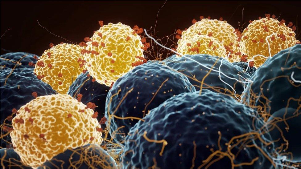 Microscope picture of coronaviruses