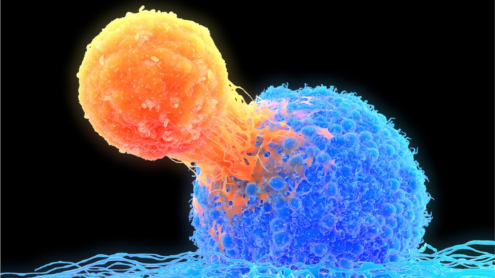 An illustration showing a T cell attacking a cancer cell