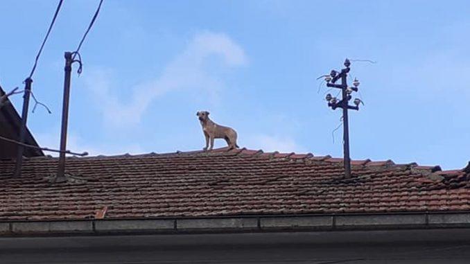 Životinje i nezgode: Otkud pas na krovu kuće u selu blizu Zaječara 8