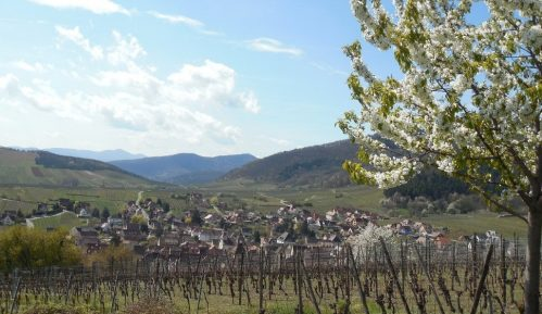 Alzas/Rikvir: Nemačka tradicija na francuski način 9