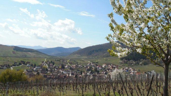 Alzas/Rikvir: Nemačka tradicija na francuski način 3