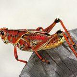 Veliki pad broja insekata u svetu 8