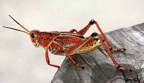 Da li ćemo zbog klimatskih promena uskoro početi da jedemo insekte? 14