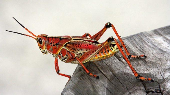 Veliki pad broja insekata u svetu 1