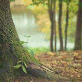 Zavod za zaštitu prirode Srbije: Sačuvajmo autohtone biljne vrste od invazivnih 2