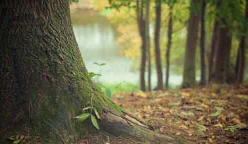 Neke šume bi zbog zagrevanja mogle da postanu izvori emisija CO2 1