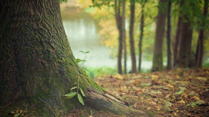 Neke šume bi zbog zagrevanja mogle da postanu izvori emisija CO2 6