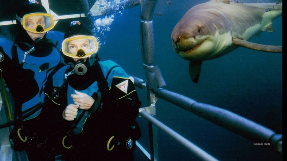 The Benchleys and a great white during a cave dive in 2005