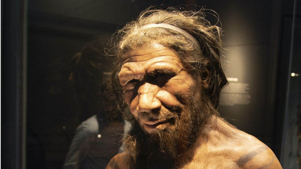 Neanderthal man at the human evolution exhibit at the Natural History Museum in London, England, United Kingdom
