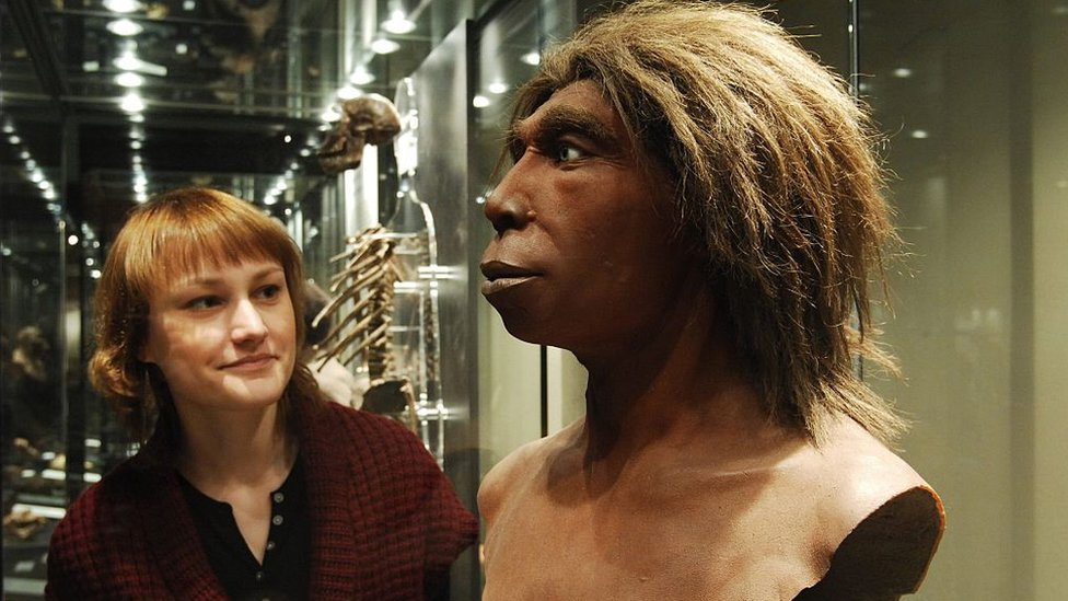 A museum visitor is looking at the head of a Neanderthal man