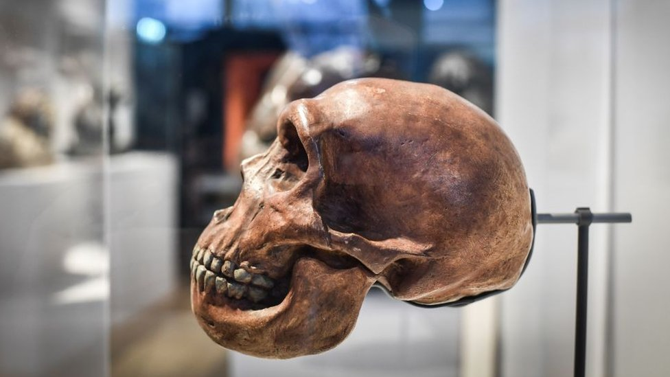 A skull is displayed as part of the Neanderthal exhibition at the Musee de l'Homme in Paris on March 26, 2018