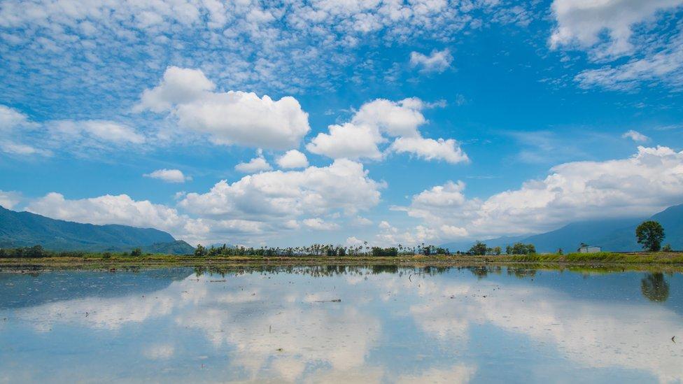 Rice fields in Taiwan