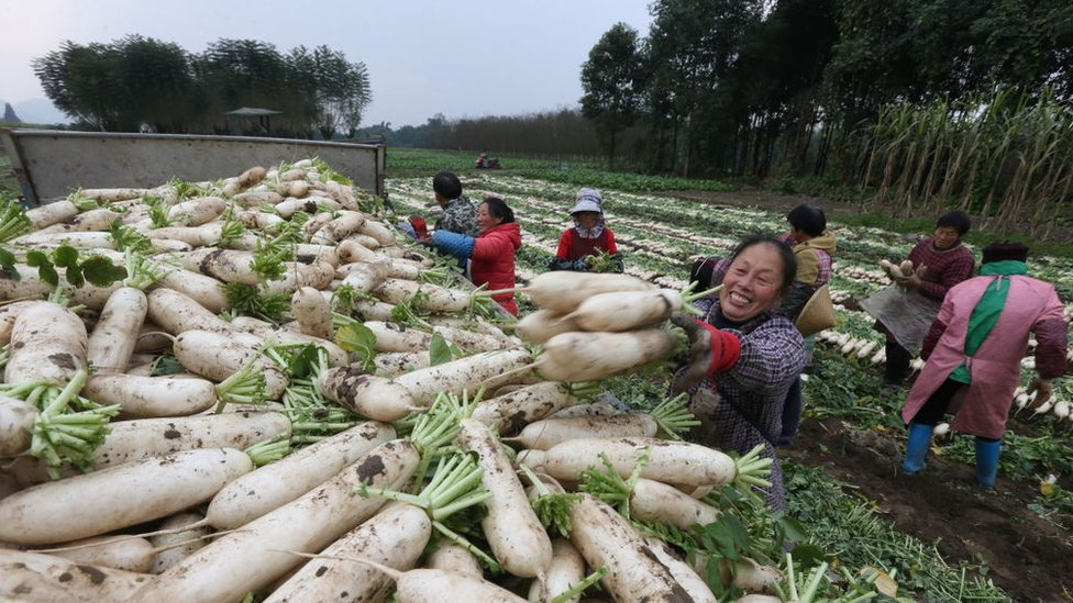 Farm field in China.