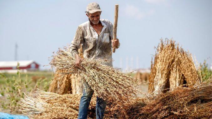 Hrana i Srbija: Država vraća susam uvezen iz Indije, koje su opasnosti po zdravlje 4