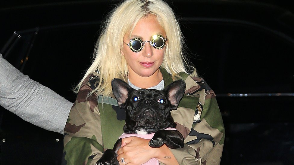 Lady Gaga with a dog. File photo