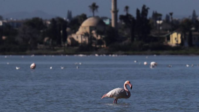 Na Halkidikiju desetine flamingosa uginulo od trovanja olovom iz sačme 5