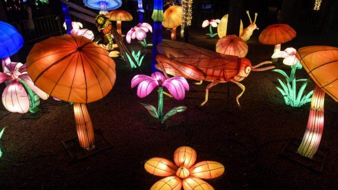 Kineski festival svetla u Beogradu i Novom Sadu od 11. do 25. februara 3