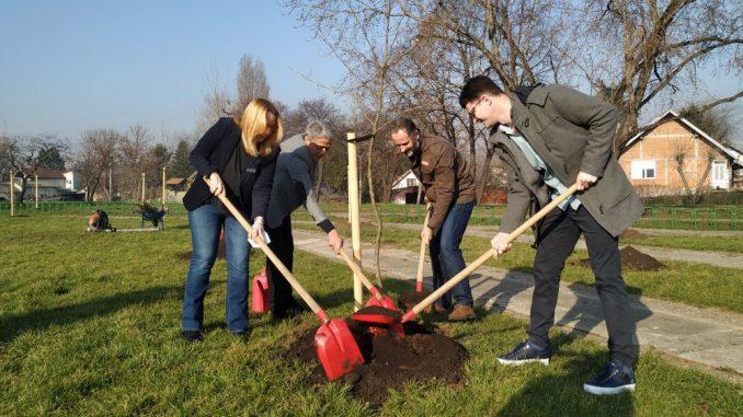 """U okviru akcije """"Drvo za Beograd"""" posađeno 95 stabala javora 4"""