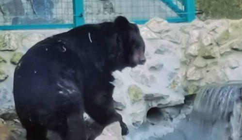 Šta nam o vremenu govori jutrošnje ponašanje medveda u zoo vrtovima u Beogradu i Paliću? 1
