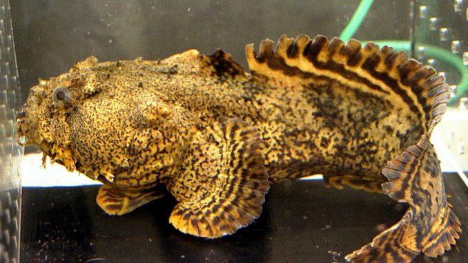 Ribe su imale gene da se prilagode životu na kopnu - dok su još plivale morima 1