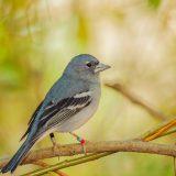 Globalno zagrevanje, sisari i ptice 15