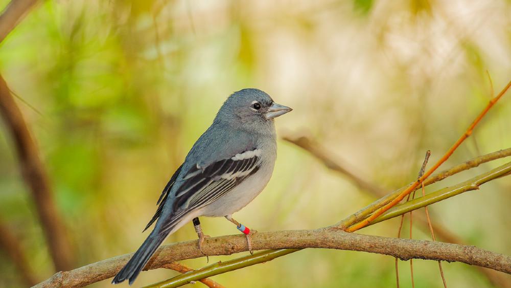 Globalno zagrevanje, sisari i ptice 1