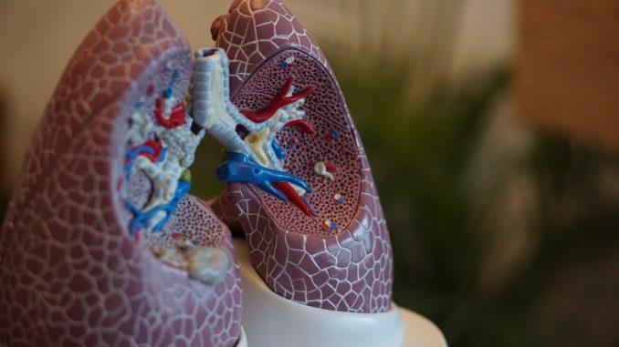 Šta treba da se zna o bakteriji pneumokok? 5