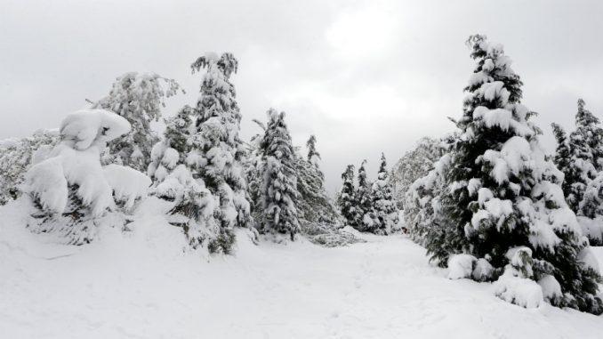 Sneg i led oštetili 2.000 hektara državnih šuma u niškom kraju 3