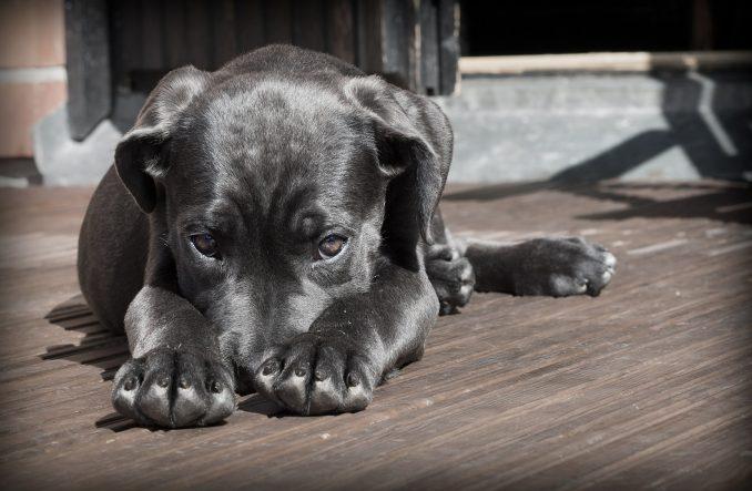 DW: Srbija, Bugarska i Rumunija epicentar ilegalnog uzgajanja pasa (VIDEO) 3
