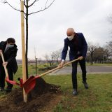 Gradonačelnik Radojičić sa ambasadorom Kuvajta posadio pedeset novih stabala 10