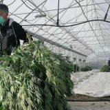 Kossev: Otkrivene dve plantaže kanabisa u zoni Košara 8
