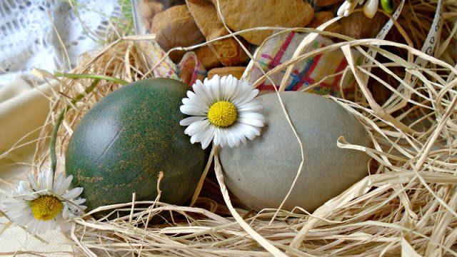 Uskršnja jaja - farbanje u ljubičastom kupusu 1