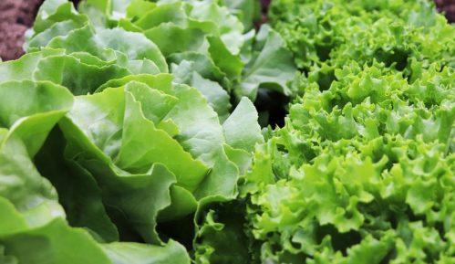 Australijanac pronašao otrovnu zmiju u zelenoj salati iz supermarketa 1