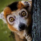Klimatske promene daleko više prete endemskim vrstama 10