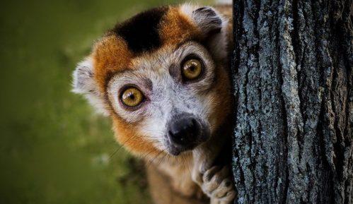 Klimatske promene daleko više prete endemskim vrstama 1