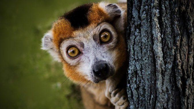 Klimatske promene daleko više prete endemskim vrstama 5
