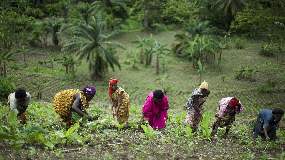 Grupa žena obrađuje zemlju u brdima oko planine Rvenzori