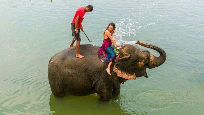Korona virus, Azija i turizam: Organizatori safarija prodaju slonove da bi sastavili kraj s krajem 3