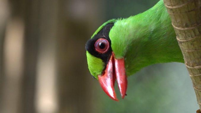 Fotografija i društvene mreže: Zašto ova ptica dobija najviše lajkova na Instagramu? 4