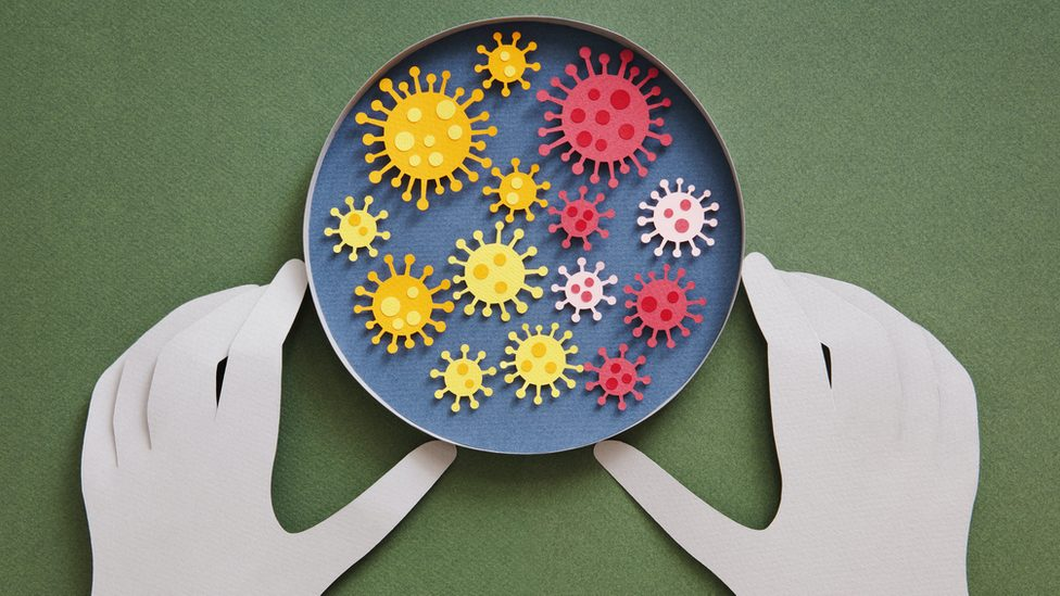 Cartoon of a petri dish containing colourful viruses of different sizes