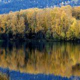 Prirodno obnovljene šume površine Francuske 12