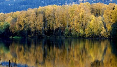 Prirodno obnovljene šume površine Francuske 3