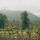 Čile: Andi iznad vinograda Maipa 5
