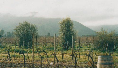 Čile: Andi iznad vinograda Maipa 3