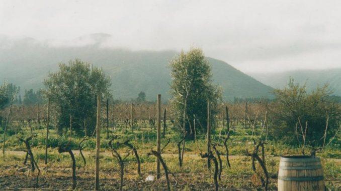 Čile: Andi iznad vinograda Maipa 1