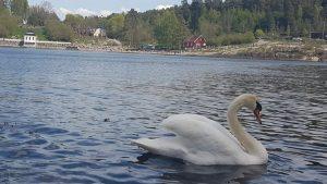 Zime su duge i hladne u Norveškoj, ali vas standard nekako oraspoloži 3