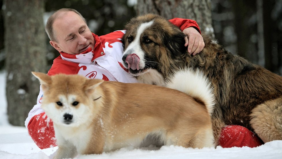 Mr Putin plays in the snow with his dogs outside Moscow