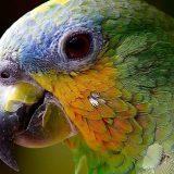 Svetski dan papagaja: Po čemu se razlikuju od ostalih ptica? 6
