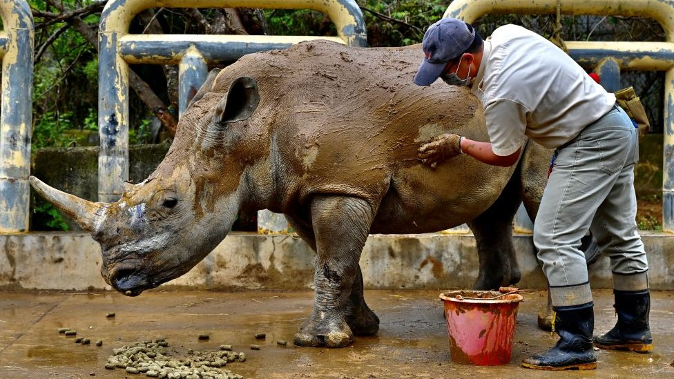 Čuvar kupa nosoroga